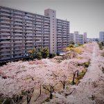 #40 日本のニュータウンとバッティングセンター